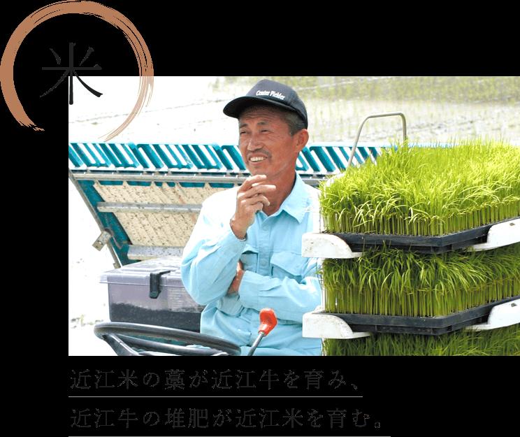 米 近江米の藁が近江牛を育み、近江牛の堆肥が近江米を育む。|農家レストランだいきち 大津堅田店
